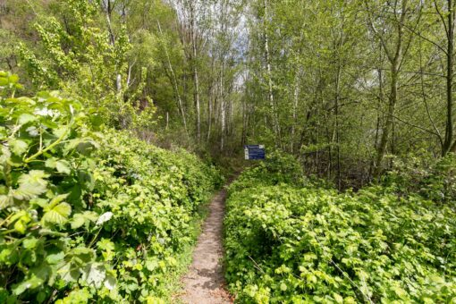 Tuinfluiter 22, Rhenen